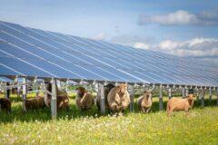 https://www.p21.nl/p21-standpunt-over-klimaat-en-energie-wind-en-zon/
